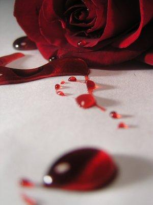 rosa sangre