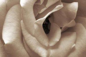 ¿Qué es la eyaculación femenina?
