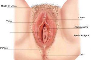 ¿Mi vagina es normal? Cómo saber si tu vagina, clítoris y labios vulvares son saludables